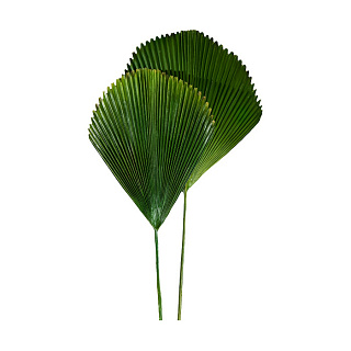 Leaf Palm Set Of 2